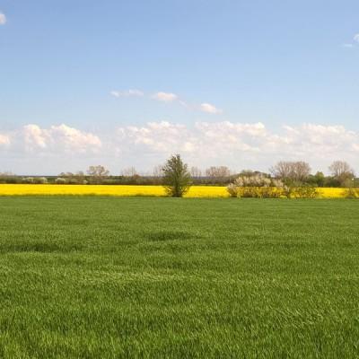 Felder rund um Großenbrode