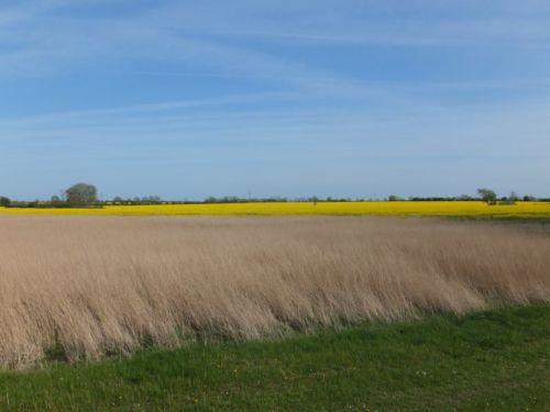 Felder am Weststrand
